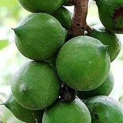 ZSK Olej makadamia organiczny deodoryzowany 15ml